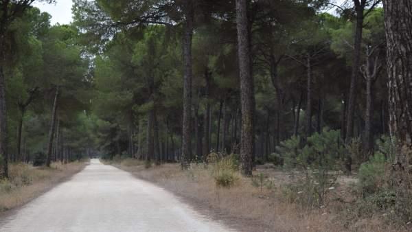 Camino de la ruta nocturna del lince en Hinojos.
