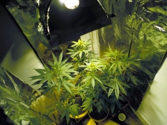 España ingresaría 3.312 millones al año si se legalizase el cannabis, según un estudio