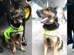 Sombra, la perra antidrogas amenazada por los narcos en Colombia