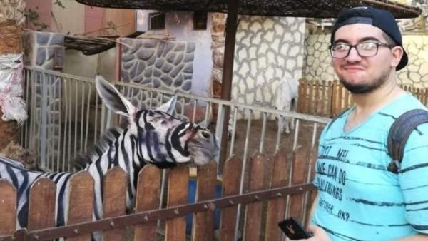 Foto de un visitante frente a uno de los burros que ha sido pintado para que parezca una cebra