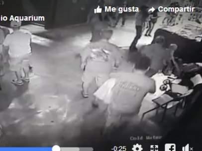 Imagen de la cámara de vigilancia en el momento que es transportado el tiburón.
