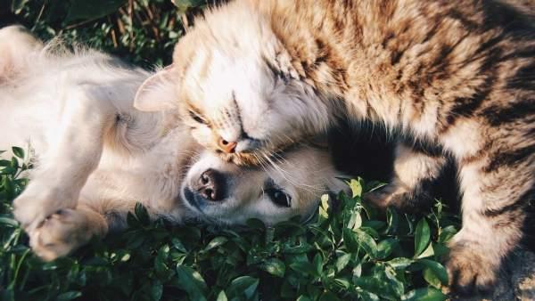 ¿Cómo afecta la ola de calor a los perros y gatos? Consecuencias y recomendaciones