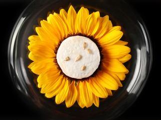 Pipas girasol heladas inicio menu degustacion restaurante torres