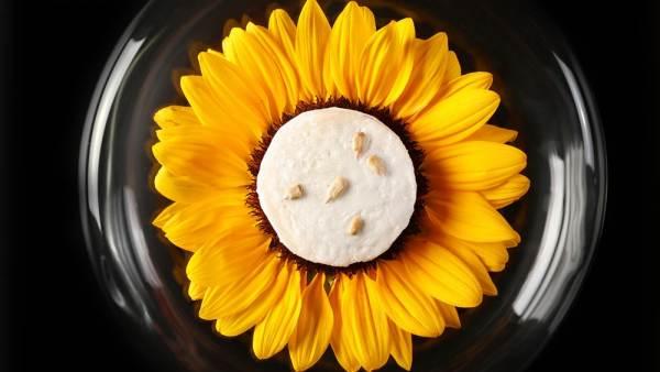 Congelado semillas de girasol casa menú degustación de torres de restaurantes