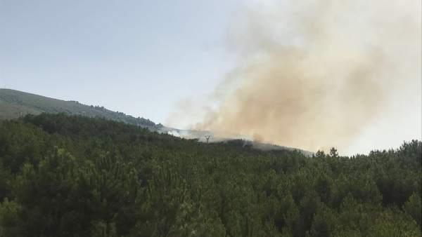 Imagen del Incendio en Pinofranqueado