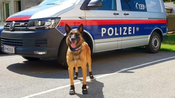 Perro Policía