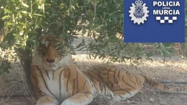 El tigre a la sombra