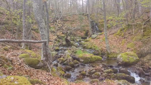 Parque Natural de Sierra Cebollera hayedo