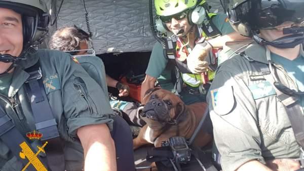 Imagen del rescate con la mascota en el helicóptero