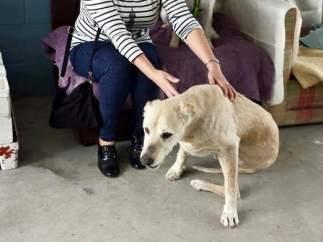 Muere Life, el perro maltratado en Pontevedra