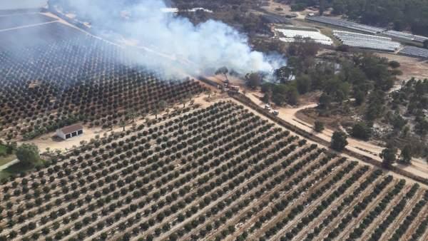 Incendio controlado por el Infoca en Moguer (Huelva).