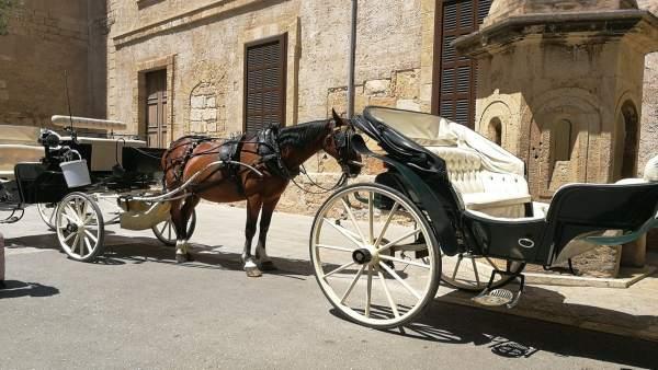 Caballos de las calesas de Palma al sol en la zona de la Catedral