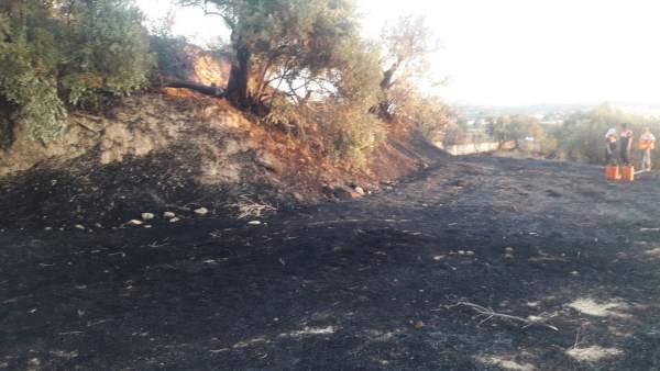 Terreno afectado por el incendio en Alhendín