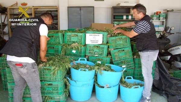 Invernadero 9.000 plantas de Marihuana