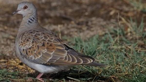 Imagen de una paloma