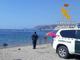 Retiran un delfín mular varado en la playa Aguamarga.
