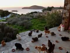 La oferta de trabajo del verano: cobrar por cuidar de 55 gatos en una isla griega