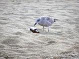 Playa contaminación
