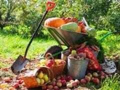 Qué sembrar en agosto: consejos para frutas, verduras y plantas aromáticas