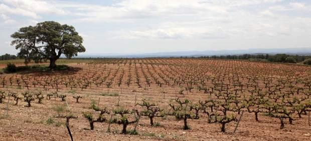 Baleares, la segunda comunidad autónoma con más porcentaje de pago de las ayudas del PDR, según ...