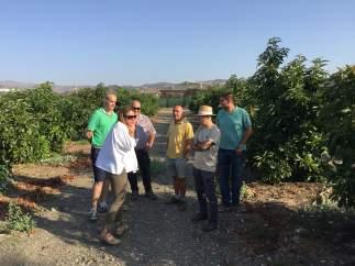 Grupos de Asaja sobre cultivo de Torpial y Cítricos