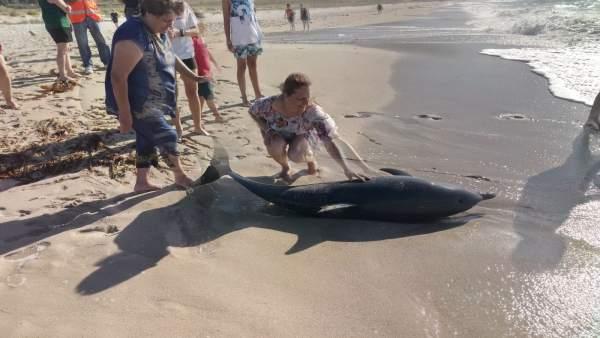 Delfín varado en la playa de Mórdomo, en Laxe (A Coruña)