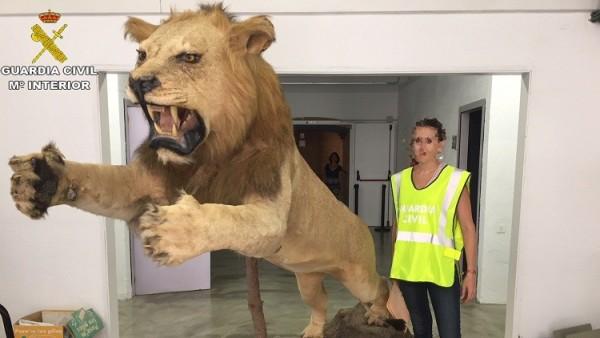 León disecado