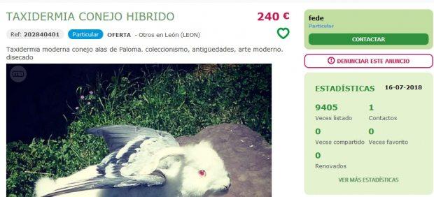 Conejo híbrido