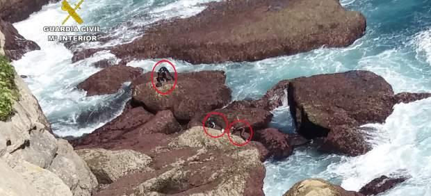 'Pescan' a dos furtivos con 18 kilos de percebes en el Panteón del Inglés en Santander