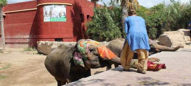 Bailes de Bollywood, 200 kilos de polvos y 5.000 botellas de colores en el festival Holi de Terra Natura