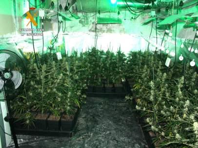 Plantación interior de marihuana desmantelada por la Guardia Civil