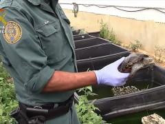 Tráfico ilegal de tortugas