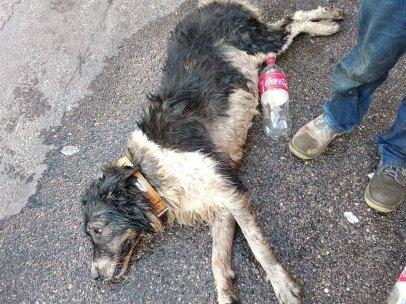 Uno de los dos perros sobrevivió tras permanecer en el vehículo varias horas