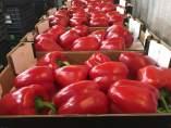 Pimiento california rojo gruventa