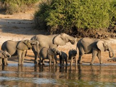 Elefantes Botsuana