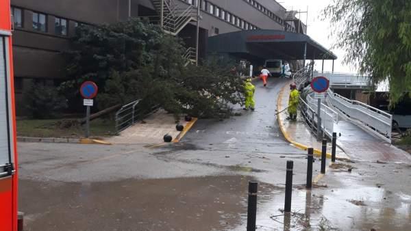 Arbol caído a la entrada de las urgencias del Hospital de Xàtiva