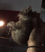 Gato rescatado