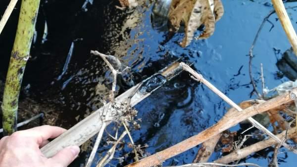 Vertido de hidrocarburo en un arroyo en La Línea