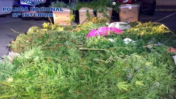 Desarticulada una organización dediicada al tráfico de drogas en Denia