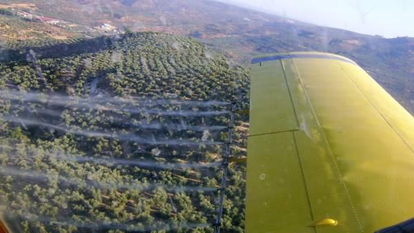 Tratamiento aéreo contra la mosca del olivo en la comarca jiennense de Segura.