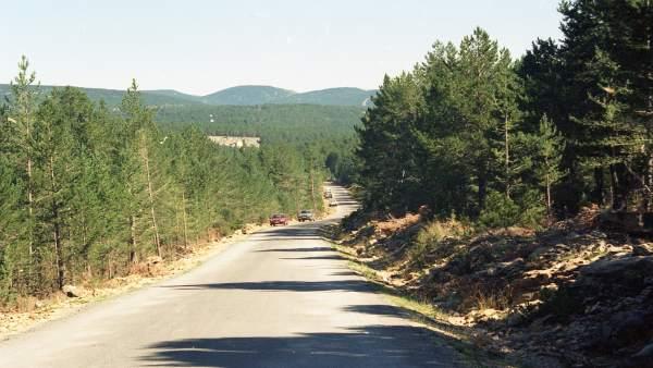 Una de las zonas de la provincia donde se pueden encontrar setas