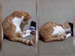 La emotiva reacción de un gato al volver ver a su dueño fallecido a través de una pantalla