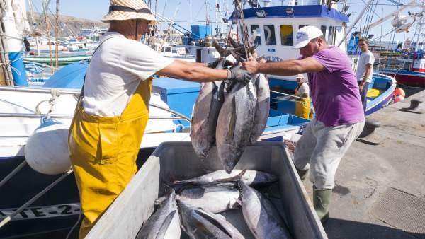 Pescadores en Los Cristianos (Tenerife)