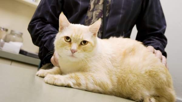 fea77ba94c Un veterinario cuenta qué sienten los gatos y perros momentos antes de morir
