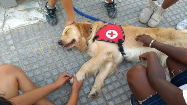 El perro voluntario de Cruz Roja