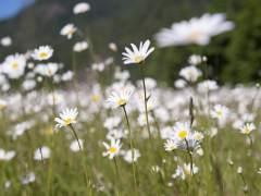 Expertos de la UNED crean un algoritmo matemático que eleva al 97% la tasa de acierto en la clasificación del polen