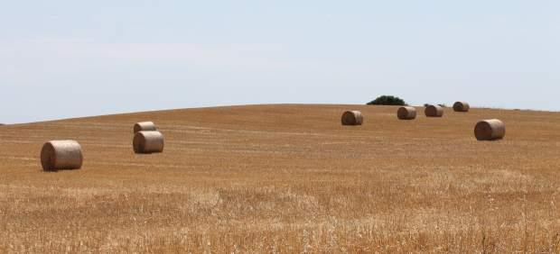 Semilla pone en marcha la campaña de suministro de semillas certificadas de cereales y leguminosas