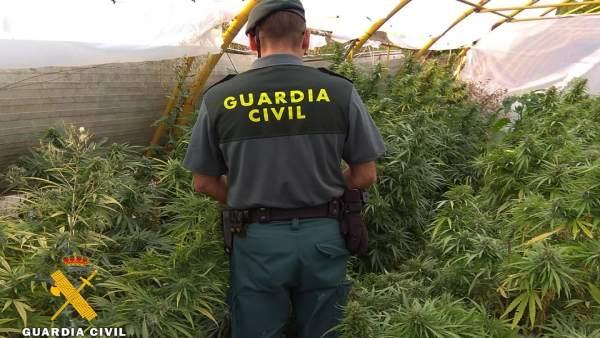 Plantación de marihuana descubierta por la Benemérita.