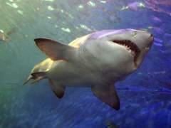 Segundo ataque de un tiburón en menos de 24 horas en Australia