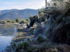 Una telaraña gigante deja una imagen fantasmagórica en Grecia